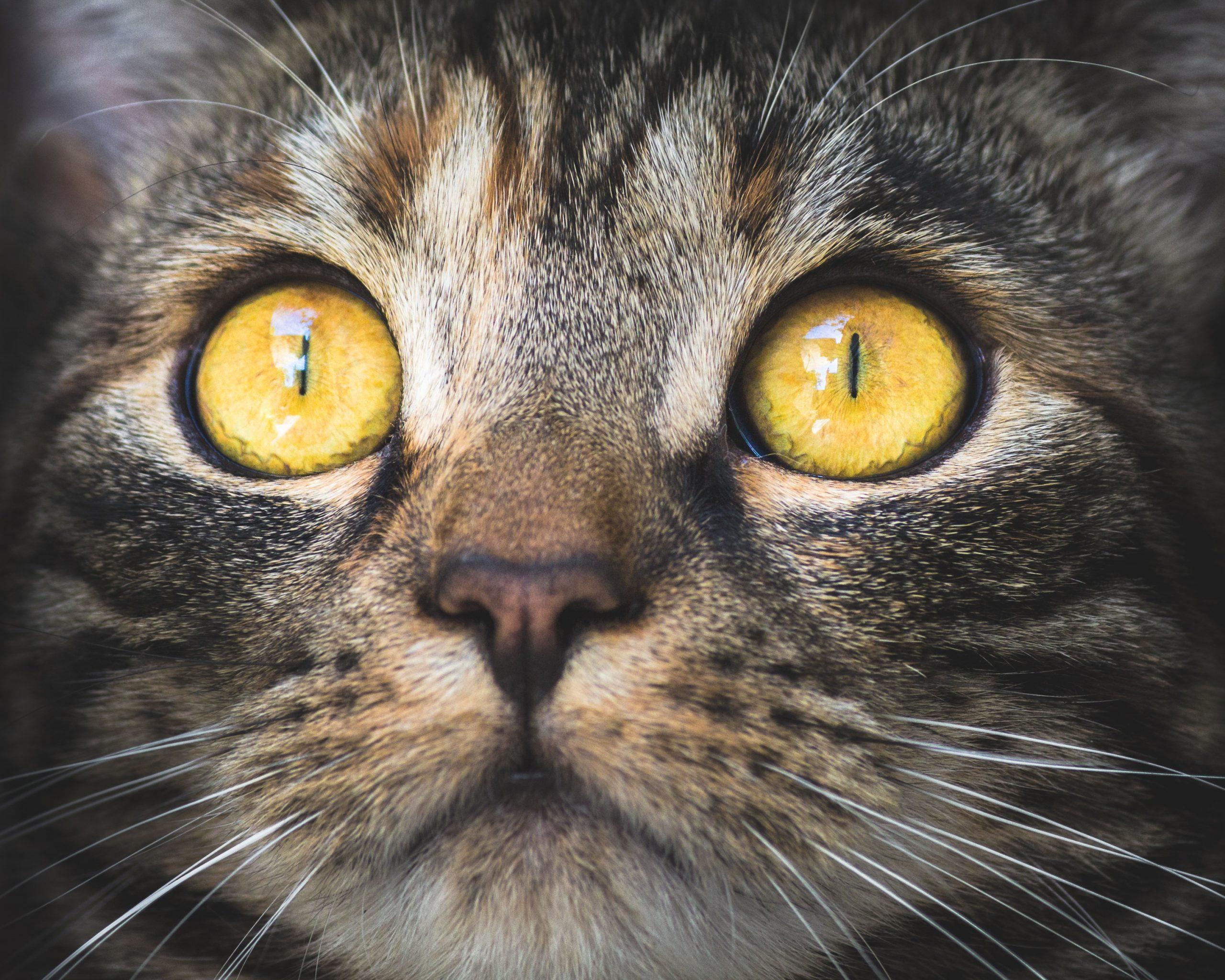 Gatti: perché sono un pericolo