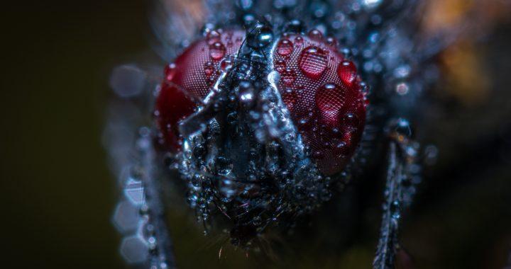 Piccoli Mostri – Breve compendio sugli insetti domestici