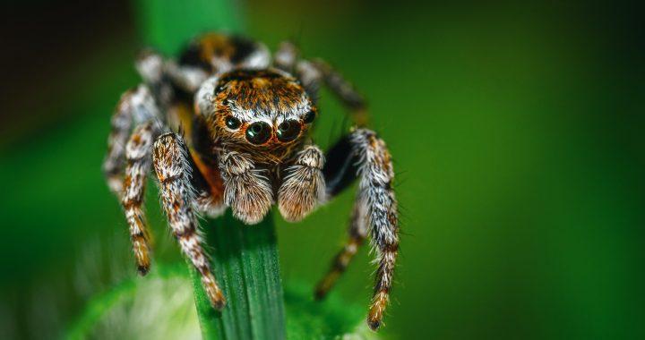 I ragni: un falso pericolo