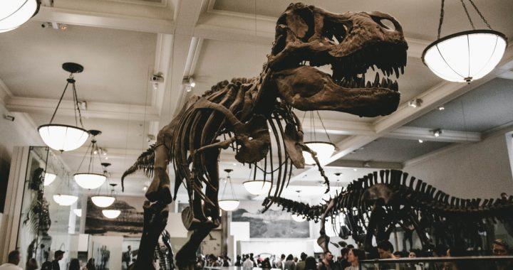 Lo straordinario mondo dei Dinosauri. Intervista a Zoosparkle