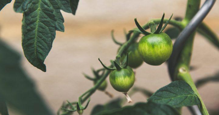 AGRICOLTURA DEL FUTURO: INTERVISTA A LUIGI MARIANI