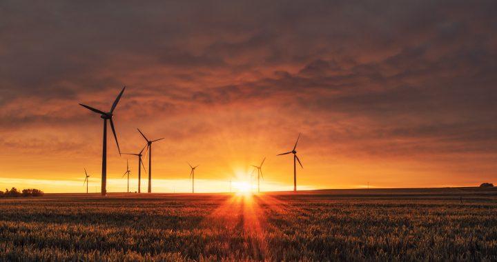 Covid- 19 e Green economy: ricetta per un futuro ecosostenibile