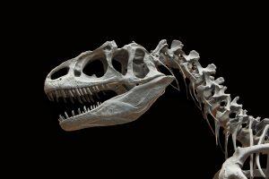 Clonare i dinosauri. Sogno o realtà?